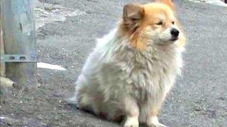 【感動】病気で帰らない飼い主を待ち続けている犬がいた! ↓チャンネル...