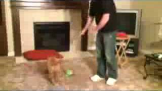 Free Dog Obedience Training Lesson 1