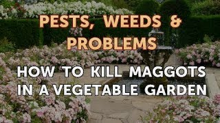 How to Kill Maggots in a Vegetable Garden