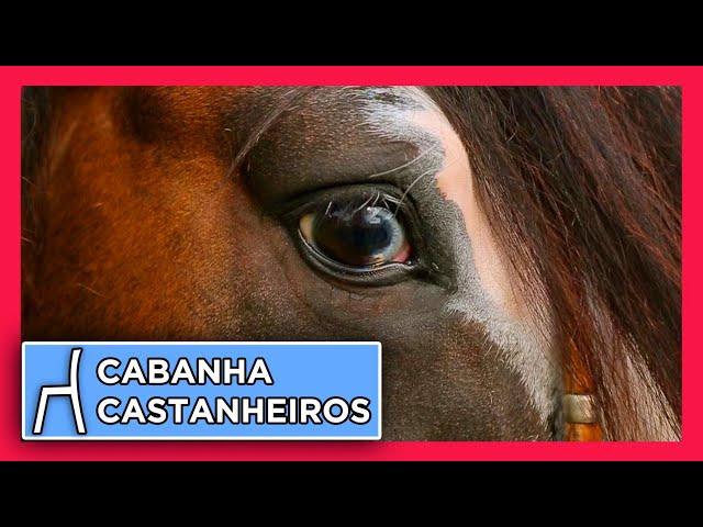 CABANHA  dos CASTANHEIROS - Cavalos bonitos e de função!