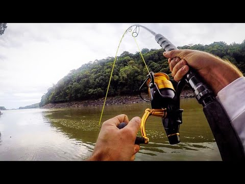 RIVER FISHING For AMAZON CATFISH!!