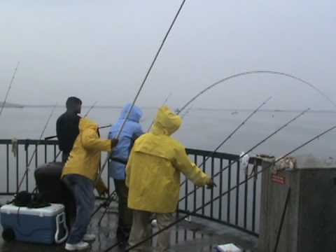 20 ft rod / blue fish / brasilva10.blogspot - youtube, Fishing Rod