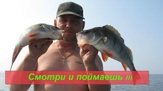 Ловля  окуня на Рыбинском Водохранилище 2016