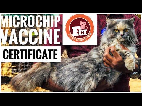 Cat Register by FCI in Gujarat | Cat show