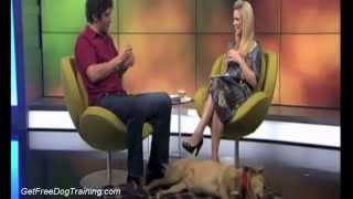 Doggy Dan's Online Dog Trainer Is It Scam Or Legit - Tv 1 Good Morning Interview With Doggy Dan