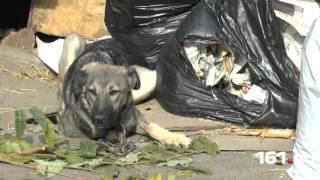 ЦБЖ: людей и собак – на улицу