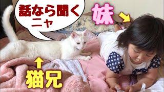 3歳児の話し相手する神猫さん 【猫さんとヒメちゃんはお友達】