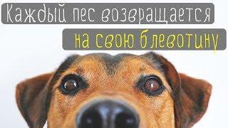 Сильно удивил комментарий. Каждый пес возвращается на свою блевотину. Какие трудности в эмиграции.