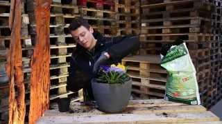 Champost planteskolejord i din krukke