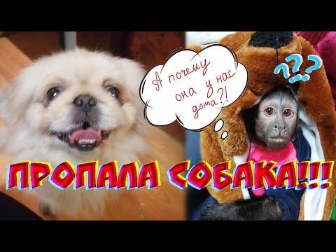 Пропала собака😓.Возвращение убежавшей собачки домой! #собака #история #обезьяна