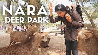 NARA TRAVEL GUIDE   Bowing Deer Park in JAPAN