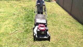 Lawn Mowing Wagga ( Little Helper )