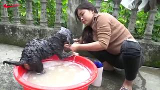 Lovely amazing girl playing with groups of baby cute dog - funny cute dog part 8
