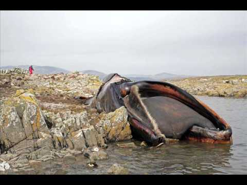 World's Biggest Animals 2 - YouTube
