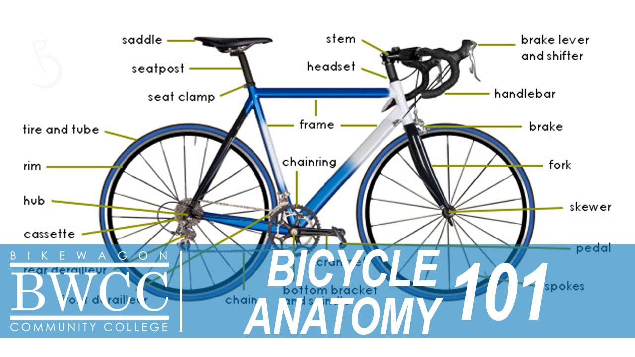 bicycle anatomy 101 learn all the parts of a bike youtube rh youtube com road bike anatomy diagram road bike anatomy diagram