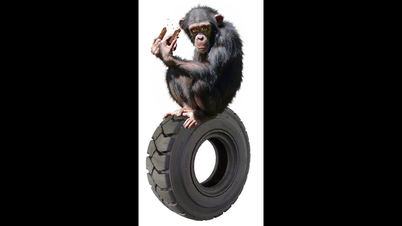 ลิงเล่นน้ำ เขาสามมุก บางแสน ชลบุรี + Monkey Pool