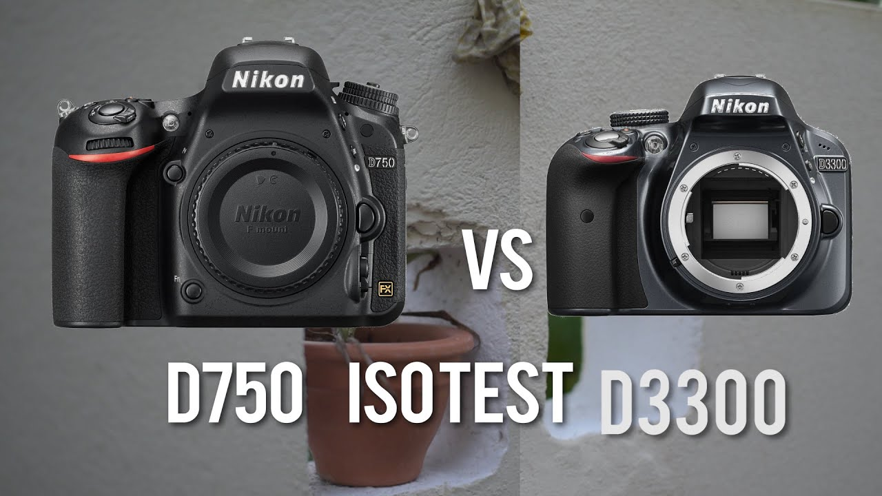 Snapshots shots pdf d3300 from nikon to great