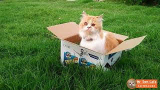 Cat and the Box - Funny Cat playing inside the box