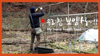 페스코채식식단 / 시골밥상 / 들깨칼국수 / 팥호떡