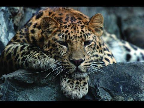 Земля леопарда. Карусель