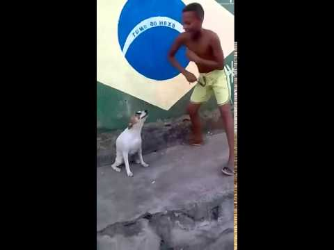 Brazilian Dog Dancing