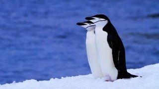 [秘境・絶景]南極のペンギン/Penguins in Antarctica Music:Eco Music...