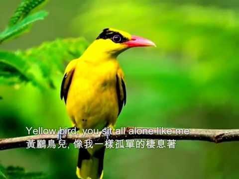 ❤♫ Brothers Four  Yellow bird 1960 黃鸝鳥