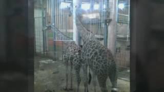 Зоопарк в Красноярске животные мои фото
