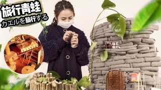 E33 DIY A Warm House For My Pet Frog | Ms Do