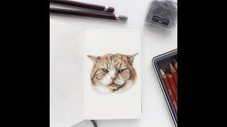 Еще один рыжий кот в процессе