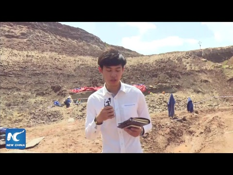 Live: Excavation of large-scale dinosaur fossils in Yanji, China