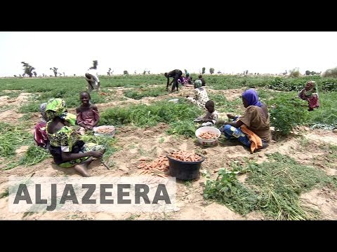 Boko Haram violence hits Nigeria's farmers