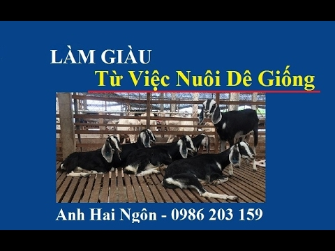 6-million-vnd-enough-to-get-rich-from-breeding-goat-farm---experience-of-a-successful-farmer