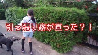 盲導犬パピーウォーカー実践ブログ☆れとさんぽ】⇒https://ippuku00.com/...