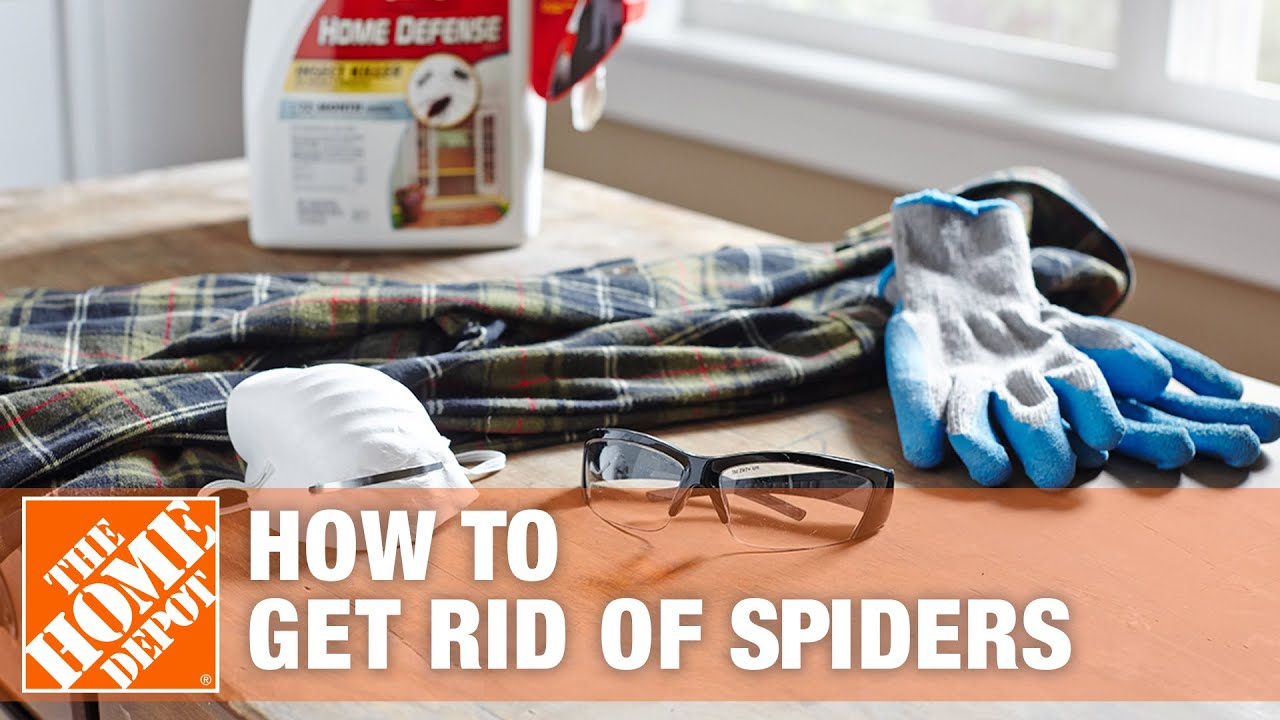 How to Get Rid of Spiders - The Home Depot