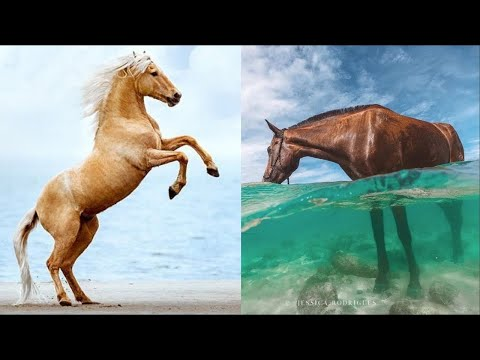 Horse SOO Cute! Cute And funny horse Videos Compilation cute moment #10