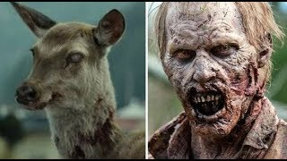 Deadly Zombie Disease to spread to Humans very soon! (Contagion)