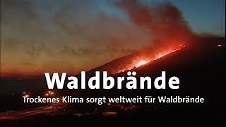 Wegen Extremer Trockenheit: Weltweite Waldbrände