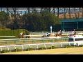 ミリッサ、エルフィンSの馬場入場。京都競馬場、現地映像。