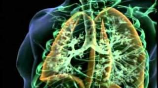 The Miracle Of Respiration - Harun Yahya Video