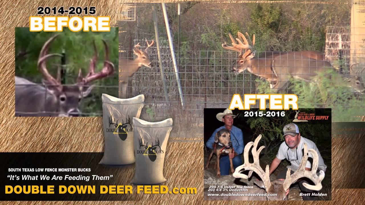 double down deer feed before after buck