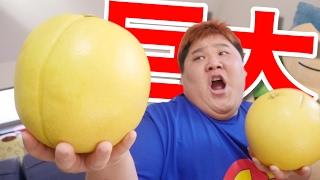 【世界一】 超巨大な幻の果実を食べてみた!