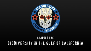Biodiversity in the Gulf of California
