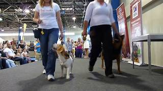 This Video Previously Contained A Copyrighted Audio Track. Due To A Claim By A Copyright Holder, The Audio Track Has Been Muted.     Obedience  - World Dog Show 2013