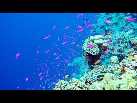 Snorkeling in tawali, Milne Bay, Alotau, Papua New Guinea