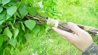 видео Черёмуховый веник для бани