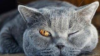 Ржачные кошки - Funny Cats #10