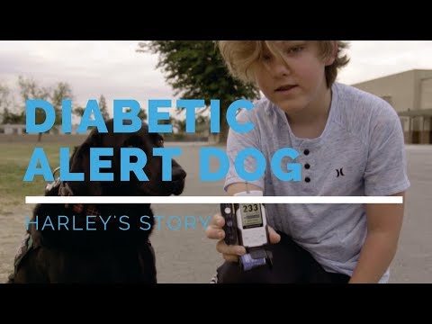 diabetic-alert-dog-feature:-harley's-story