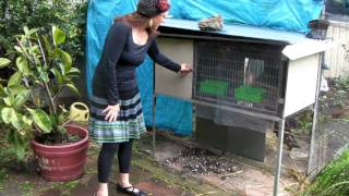 How To Build A Self-cleaning Chicken Coop