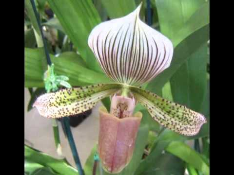 ORQUIDEAS COLOMBIANAS ,FB.wmv